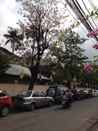 street to KhaoSan Baan Thai, a Himalayan Cherry Blossom tree