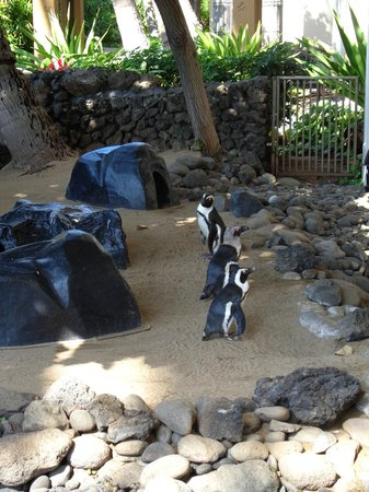 Hyatt Regency Maui Resort and Spa: Penguins in the lobby