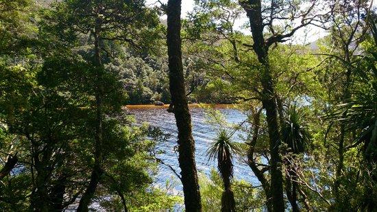 Dove Lake Circuit: sparkling water through the trees