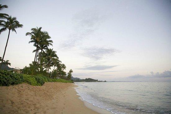 Pat's at Punalu'u: The beach at sunrise.