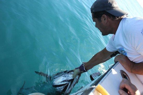 Xiphias Biggamefishing : Pêche au thon et pêche au gros en France