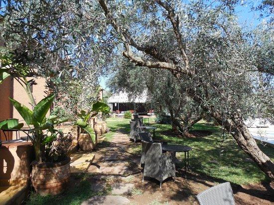 Dar Zarraba : jardin