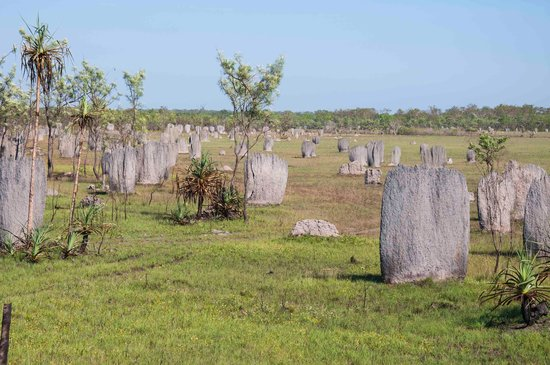 Batchelor, Australie : Magnetic Termite Mounds at the back end of Litchfield