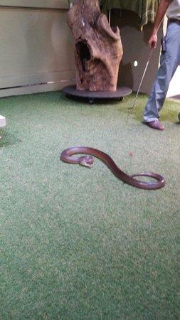 David Fleay Wildlife Park: Grumpy Frankie the snake.