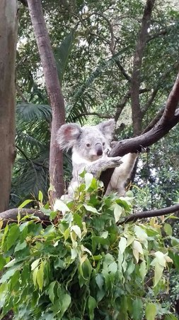 David Fleay Wildlife Park: Just chilling in me tree