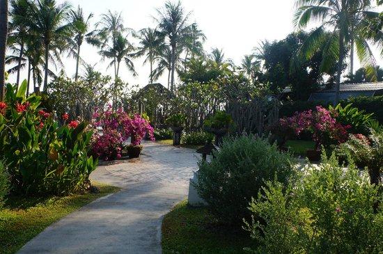 Coco Palm Beach Resort : Дорожка к бассейну, пляжу и ресторану