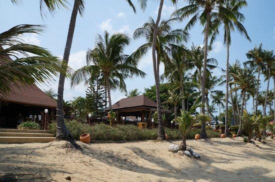 Coco Palm Beach Resort : Вид с пляжа на ресторан