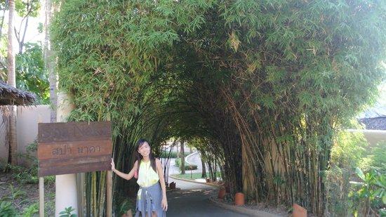 The Naka Island, A Luxury Collection Resort & Spa Phuket : Entrance to SPA