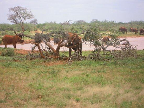 Crystal Bay Resort: elefante incagliato
