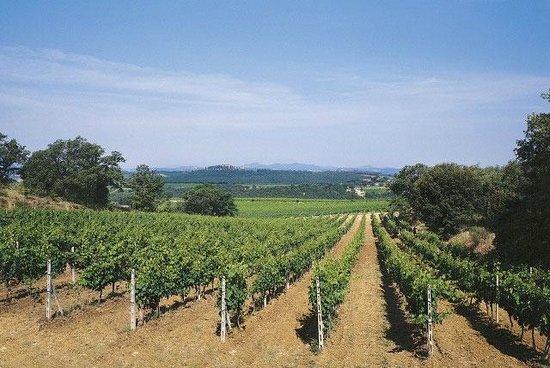 Agriturismo Bruscola: vigneti
