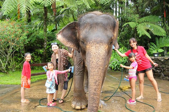 Elephant Safari Park & Lodge : Active