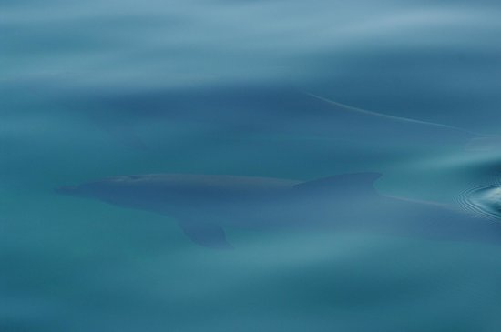 Temptation Sailing : Dolphins underwater