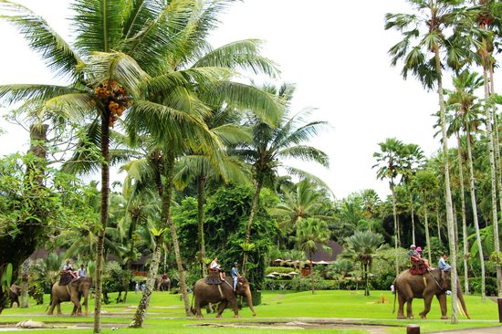 Elephant Safari Park & Lodge: Park