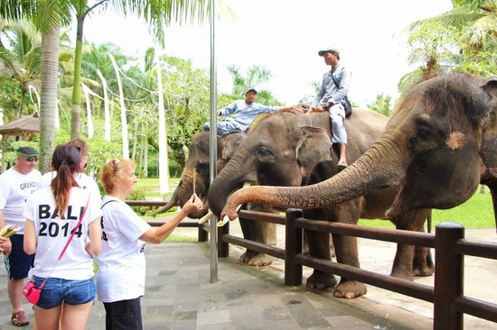 Elephant Safari Park & Lodge: Active