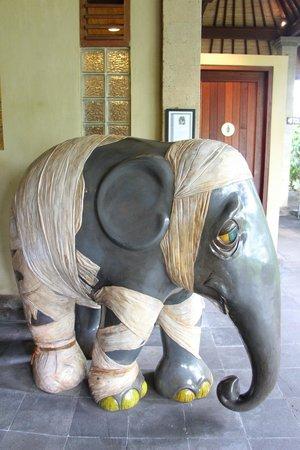 Mason Elephant Lodge: Elephant