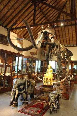 Mason Elephant Lodge: Meseum