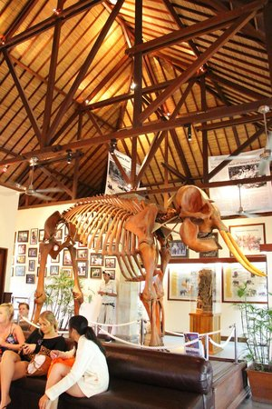 Elephant Safari Park & Lodge: Meseum