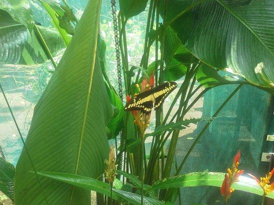 Mawamba Lodge: butterflies