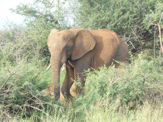 Etali Safari Lodge: Game drive: Elephant