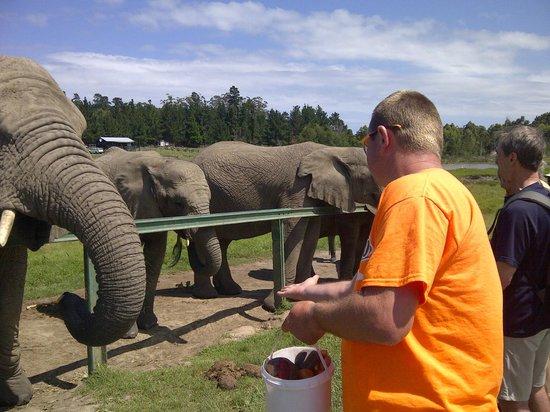 Κνούσνα, Νότια Αφρική: Freek giving them some food