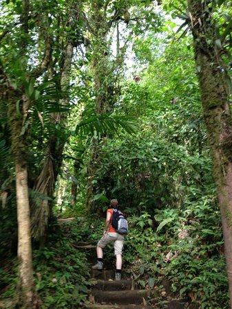 GreenLagoon Wellbeing Resort: Cerro Chato Hike
