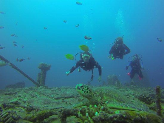 Oahu Diving: Talking to sea turtles