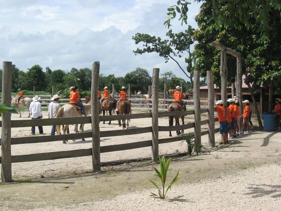Num Ka'an Ranch: horseback riding with a variety of horses perfect for every rider