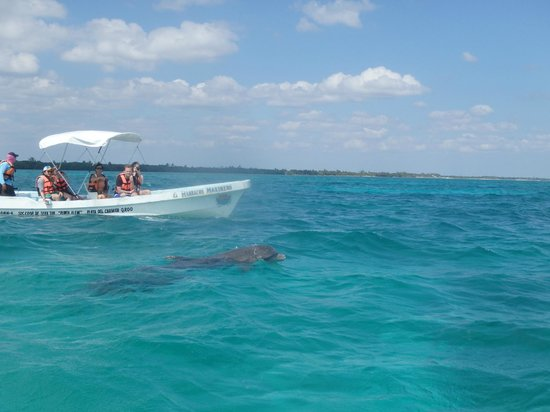 Paseo Tours: Dauphins