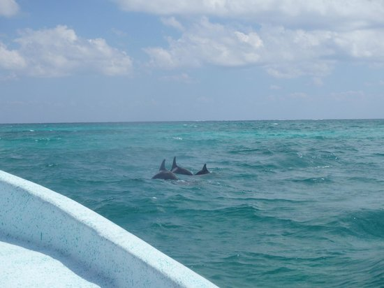 Paseo Tours: 3 dauphins