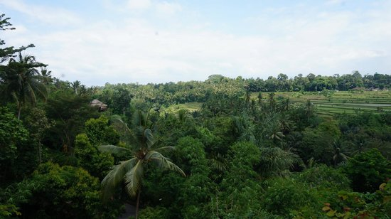 The Samaya Bali Ubud: View from the breakfast terrace