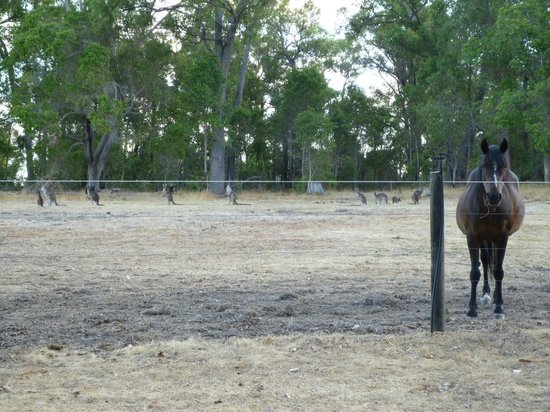 Riverwood Retreat Bed & Breakfast : Horse and Friends sharing a late summer, late evening paddock.