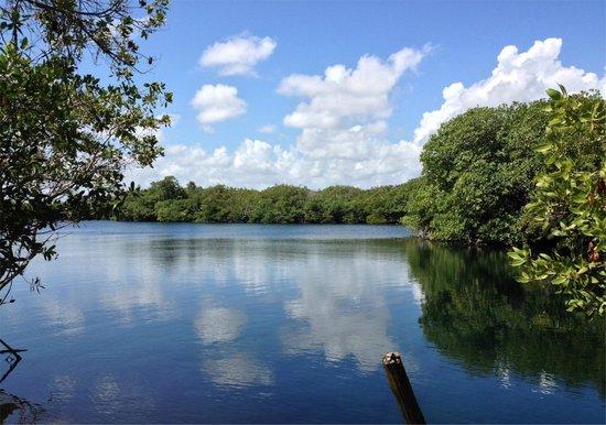 Posada Ecologica Dos Ceibas : El Encanto Cenote