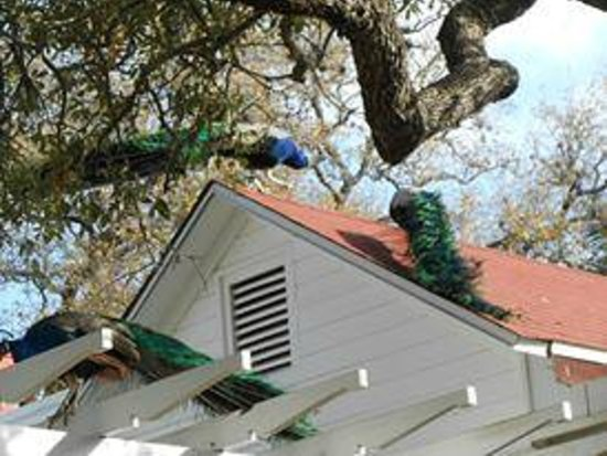 Mayfield Park Cottage and Gardens : Yep, on top of the house