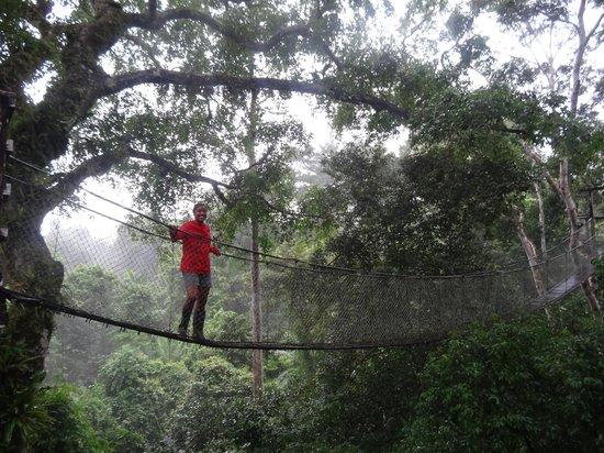 Inkaterra Hacienda Concepción: Canopy