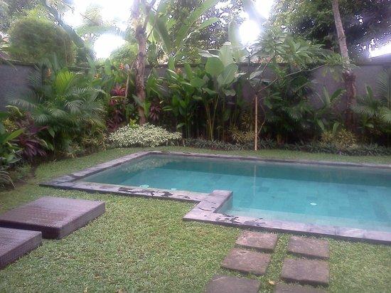 Mango Tree Villas: Pool