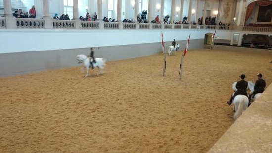 Spanish Riding School : Spectacle
