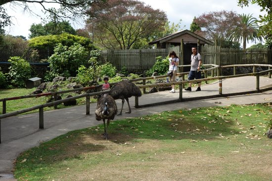 Auckland Zoo : Emu and Wallaby enclosure