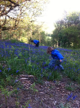 Old Oak Barn: Bluebell Picking May 2013