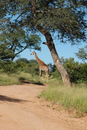 Tshukudu Game Lodge: ...beim Morning walk
