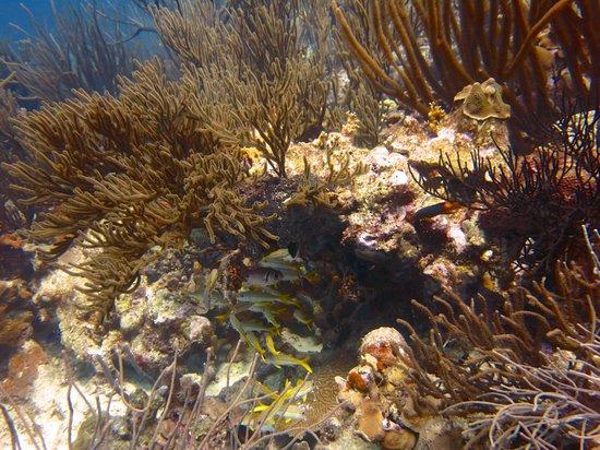 VIP Diving: Soft corals