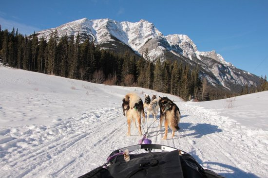 Snowy Owl Sled Dog Tours : Beautiful scenery for Snowy Owl Tours