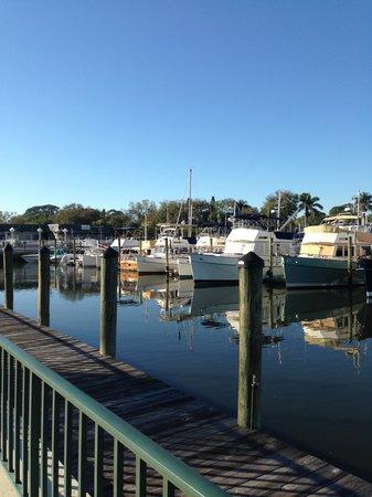 Ramada Sarasota: Wish one of the yachts were mine!