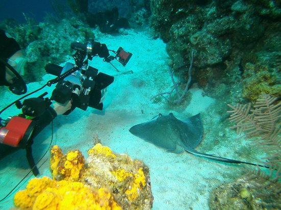 Dive Provo: Up close with Southern Sting Ray