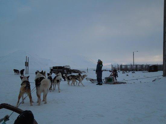 Svalbard Villmarkssenter - Day Tours: Preparing for the beginning of the dogsledging tour