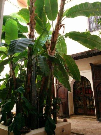 Riad Bamileke : Il fantastico banano al centro del riad