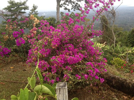 Bocas Ridge Hotel: Otra hermosa vista