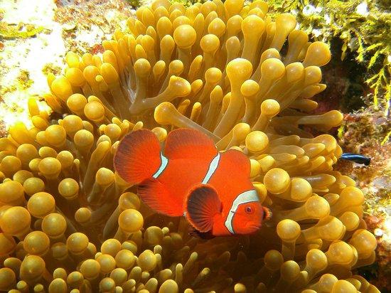 Wakatobi Dive Resort: vita subacuea