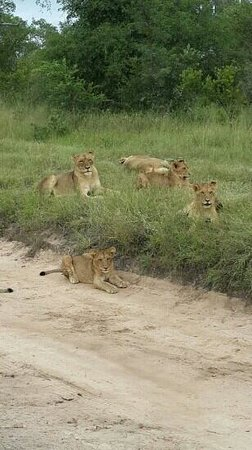 Summit Tours and Safaris -  Day Tours: Summit Tours and Safaris Day Safari