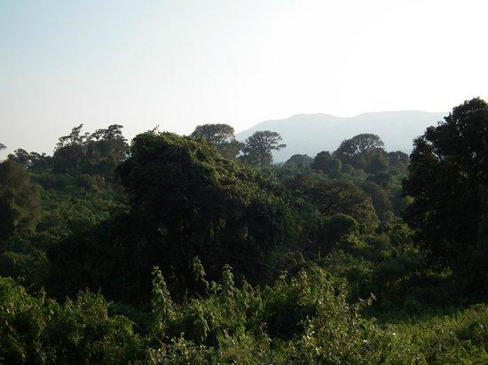 Ngorongoro Rhino Lodge : Vista desde la terraza de la habitación al bosque de alta montaña.