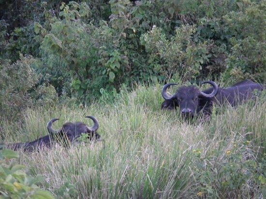 Ngorongoro Rhino Lodge : Vista desde la terraza de la habitación.